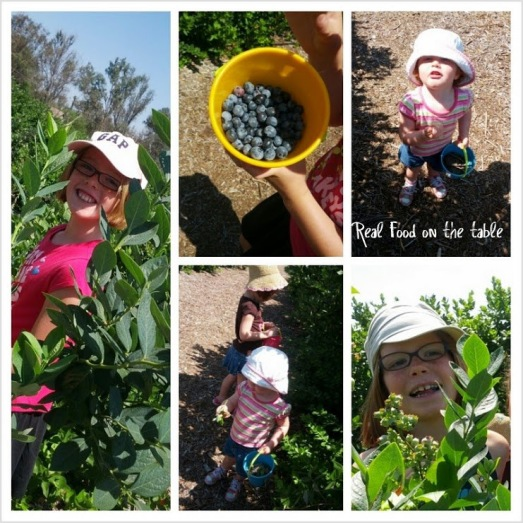 berrypicking